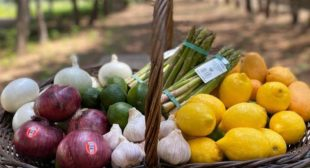 Organic Fruits and Vegetables Supplier Is Expected To Remain High On Demand